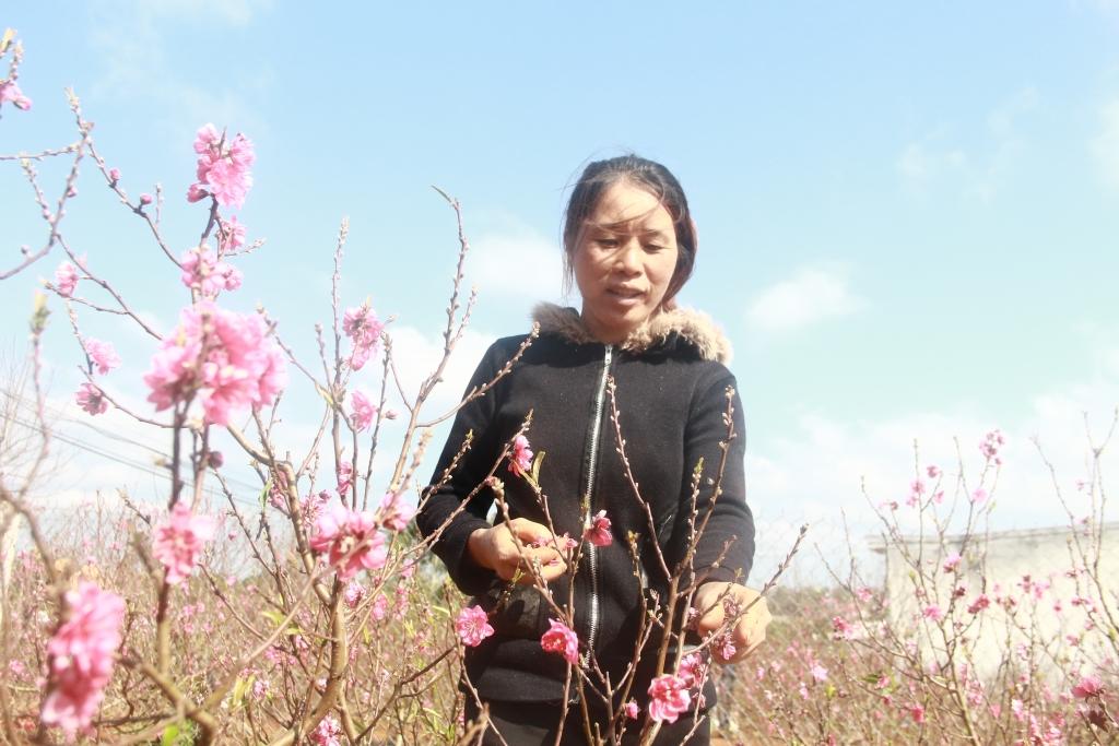 Chị Yến cũng hy vọng có thể bán được hết đào trong năm nay.. Ảnh: Trang Anh
