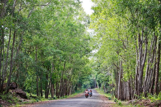Con đường tuyệt đẹp dẫn vào khu công viên hồ. (Ảnh: Tiến Thành)