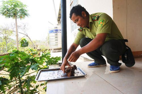 Nhân viên vườn Quốc gia Yok Đôn bắt kiến làm món bò tái bóp kiến vàng