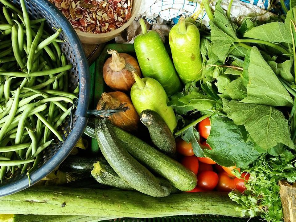 Thu hoạch rau quả.
