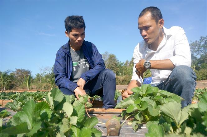 Anh Hiếu (áo trắng) tư vấn kỹ thuật trồng dâu tây cho khách
