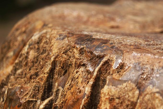Các nhà thần học phương Tây lại cho rằng, gỗ hoá thạch nguyên bản là một khúc gỗ, sau khi trải qua quá trình thạch anh, hóa nó đã biến thành loại đá quý. Do vậy, gỗ hoá thạch có đặc tính vĩnh cửu.