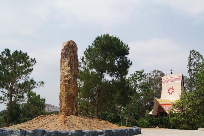 Các nhà khoa học đã chứng minh khu vực miền Trung và Tây Nguyên, đặc biệt là tỉnh Gia Lai vốn tồn tại hàng chục ngọn núi lửa. Cùng với quá trình biến đổi địa chất hàng triệu năm, gỗ hóa thạch được tạo nên từ sự phân hủy của các chất hữu cơ trong thân gỗ diễn ra suốt một thời gian dài đó.