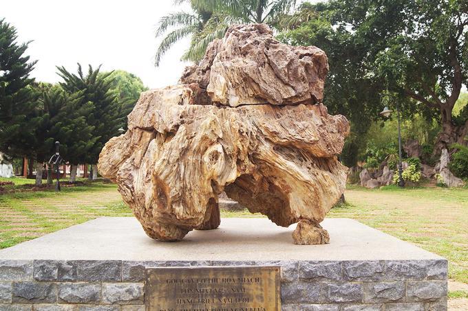 Trong hình là gốc cây cổ thụ hóa thạch lớn nhất Việt Nam với hàng triệu năm tuổi được tìm thấy ở miệng núi lửa Chư A Thai.
