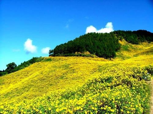 Tây Nguyên - Mùa hoa dã quỳ nở rộ. (Nguồn: zoomtravel.com.vn)