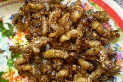 Ve sầu món ăn rất được ưa chuộng với nhiều thực khách. Ảnh: Thesaigontimes.