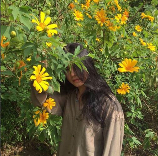 Hoa dã quỳ còn có nhiều tên gọi khác như: hoa cúc quỳ, sơn quỳ, quỳ dại, hướng dương dại, hướng dương Mexico. Theo các nhà khoa học, dã quỳ là một loài thực vật họ cúc (Asteraceae). Ảnh: maianhnguyen05
