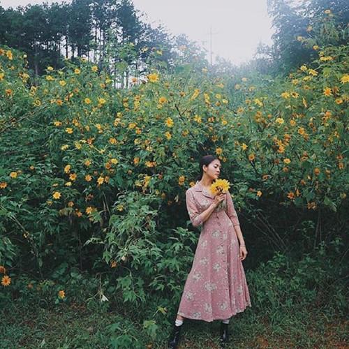 Ba Vì, Đà Lạt, Tây Nguyên hay Mộc Châu chính là những địa điểm được các bạn gái lựa chọn để khoe sắc bên hoa dã quỳ. Ảnh: Summer_rose