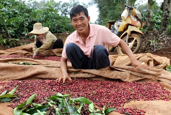 Cập nhật giá cả thị trường nông sản hôm nay 14/4, giá cà phê giảm về đáy dao động 36.000 đồng – 36.700 đồng/kg. Ảnh minh họa