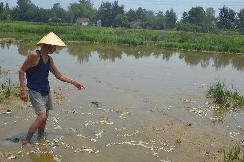 Hiện tượng cá chết đáng báo động ở Đà Nẵng.