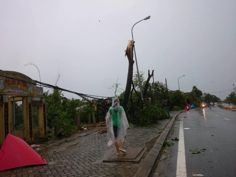 Cây cối gãy đổ trước cơn bão tại Thừa Thiên Huế