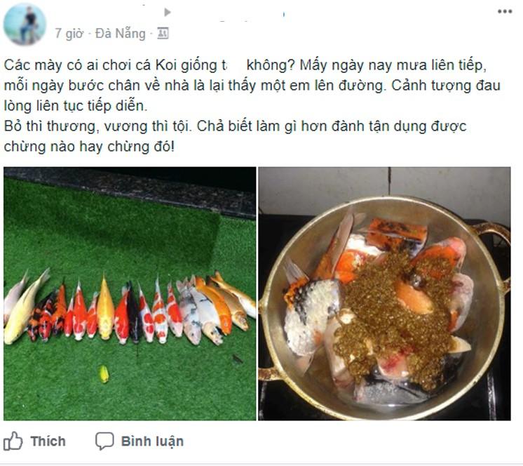 Dòng chia sẻ của anh chàng dùng cá Koi làm món ăn. Nguồn KSC
