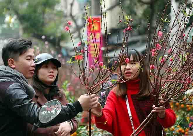 Người dân lựa chọn những cành đào ưng ý về chơi Tết tại chợ hoa Hàng Lược - Hà Nội. Ảnh: Quý Trung - TTXVN