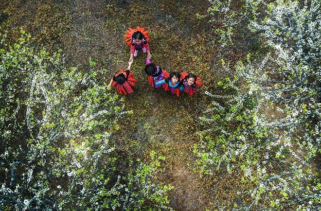 Những em bé Mông chơi đùa dưới tán hoa mận trong thung lũng mận Nà Ka - Mộc Châu. Ảnh: Trọng Đạt - TTXVN