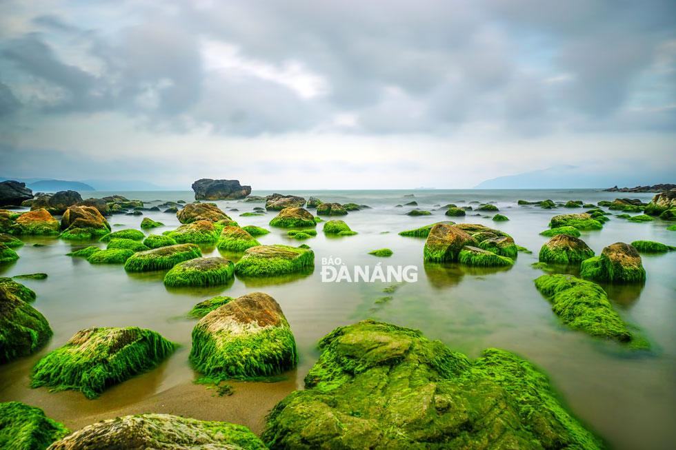 Sau mùa đông, đến tháng Giêng, tiết trời nắng ấm, rêu xanh bắt đầu mọc trên các tảng đá,giữa làn nước biển trong veo