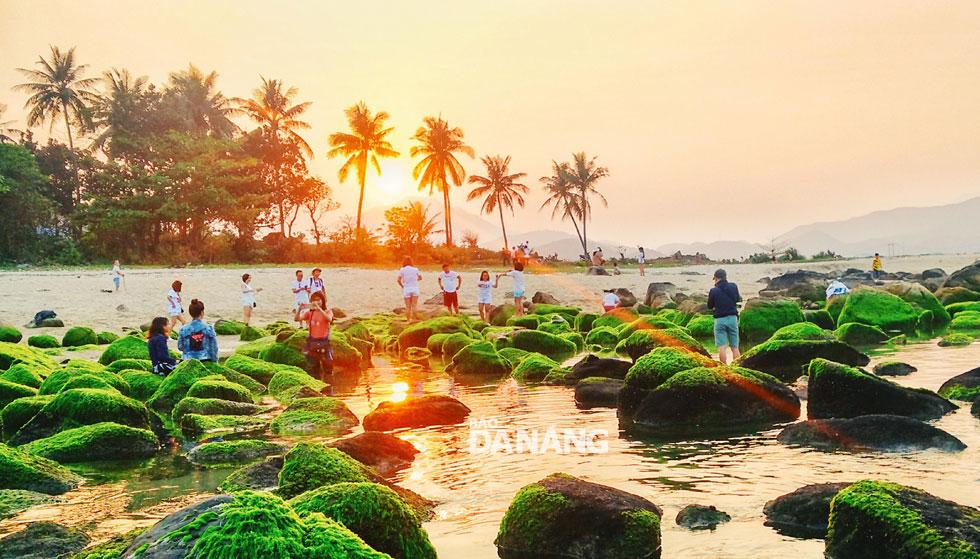 Những ngày này, rạn Nam Ô thu hút rất nhiều bạn trẻ đến để ngắm cảnh và chụp hình.
