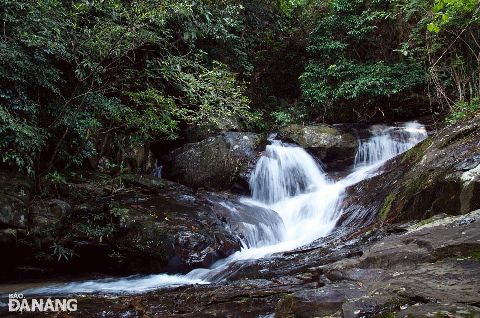 Suối đổ dài dưới tán cây rừng xanh mát.