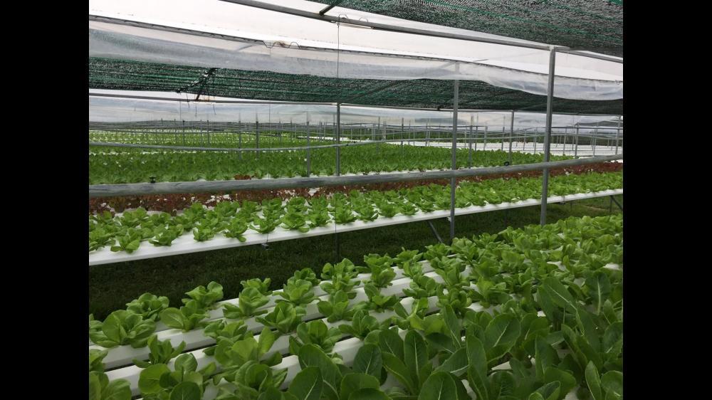 Không gian bên trong trang trại trồng rau thủy canh của anh Sĩ và anh Thái.