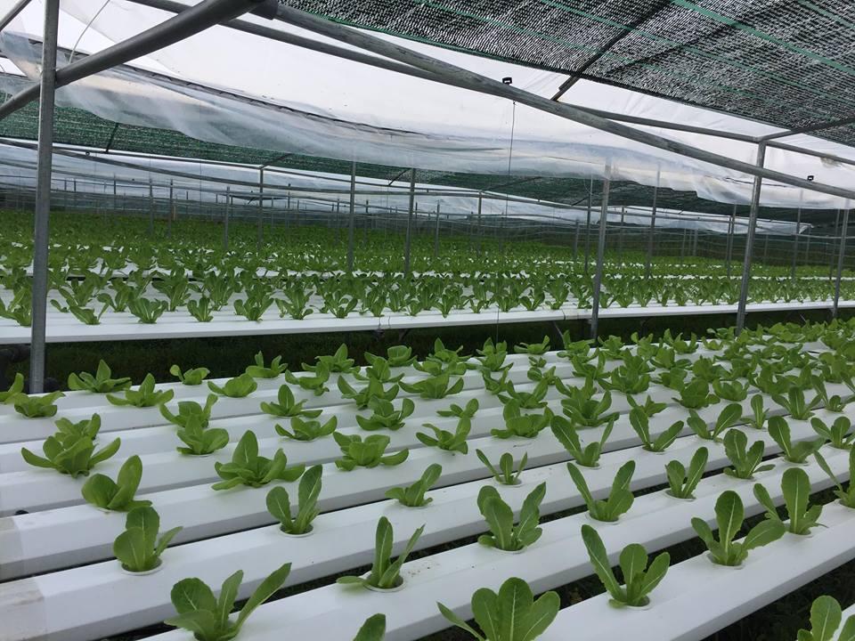 Trong trồng rau, các anh chỉ sử dụng chế phẩm sinh học.