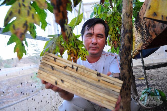 Ông Nguyễn Thanh Phong nuôi ruồi lính đen từ năm 2017 và mô hình cho thu nhập cao. Ảnh: Minh Hậu.