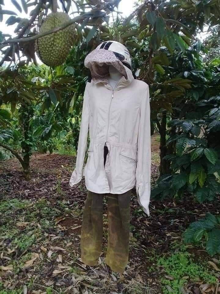 Một hình nộm người dưới gốc cây để