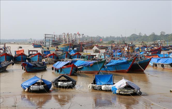 Tàu thuyền ngư dân huyện Vĩnh Linh neo đậu an toàn tại khu neo đậu tránh trú bão Cửa Tùng. Ảnh: Hồ Cầu/TTXVN