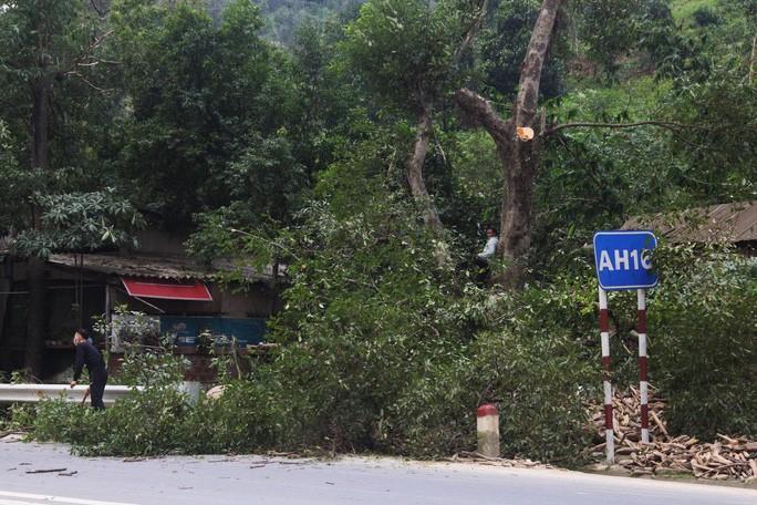Người dân Quảng Trị cắt tỉa, đốn hạ cây cối trước bão số 13