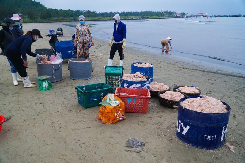Theo ngư dân, ruốc năm nay được mùa nhưng sản lượng đánh bắt không bằng năm ngoái.