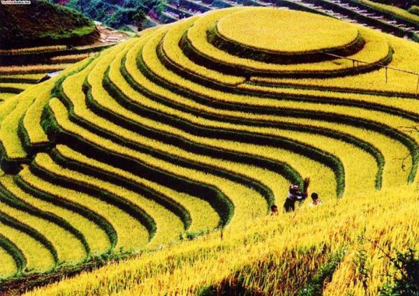 Nguồn: vietnamtravelsonline.com