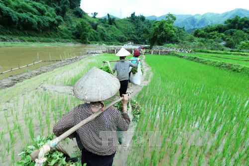 Mọi sinh hoạt đi lại tiếp xúc với bên ngoài của người dân đều phải đi qua con suối Nậm Hua.