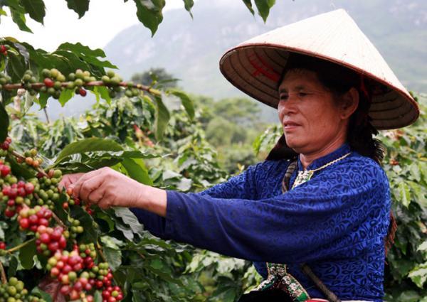 Từ việc hái cà phê đã giúp nhiều người dân có thêm thu nhập.