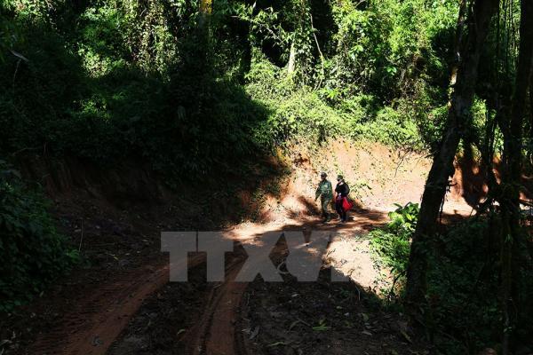 Du khách có thể chìm vào những cánh rừng rậm rạp quanh co đồi núi. Ảnh: Phan Tuấn Anh/TTXVN
