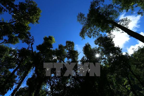 Thảm thực vật phong phú trên cung đường lên cột mốc. Ảnh: Phan Tuấn Anh/TTXVN