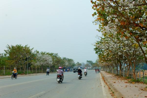 Đến mùa Ban nở hoa, mọi con đường của TP. Điện Biên Phủ trở nên thơ mộng hơn bao giờ hết.