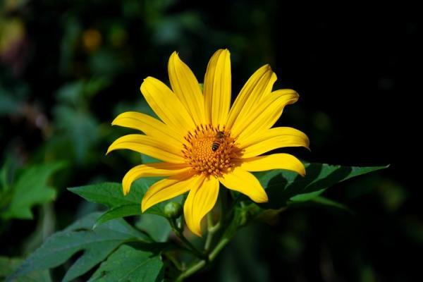Tuy không có mùi hương hấp dẫn nhưng nhờ cóvẻ đẹp rực rỡ nênloài hoa