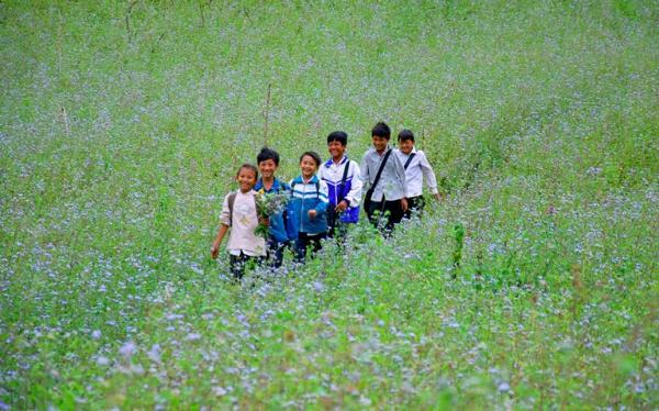 Hoa Ngũ sắc gắn bó với tuổi thơ của trẻ em vùng cao.