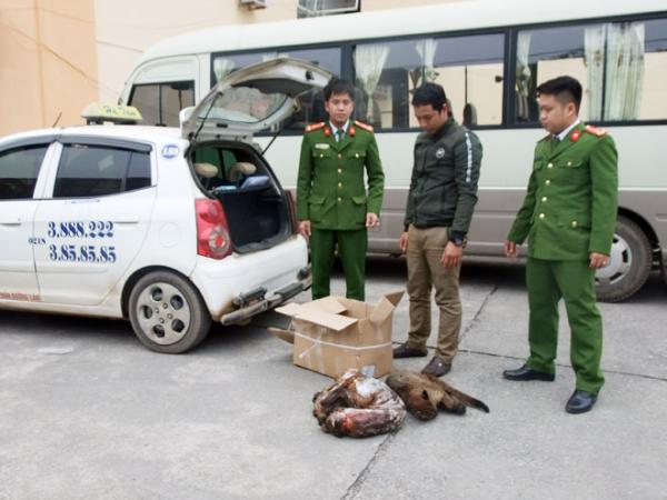 3 cá thể động vật hoang dã được thu giữ.