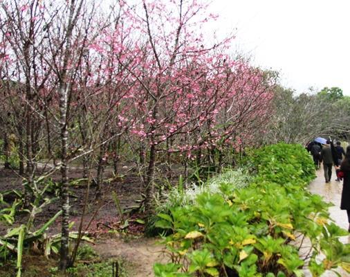 """Sự kiện nhằm thúc đẩy sự phát triển của Khu du lịch Pá Khoang - Mường Phăng; đưa """"Đảo Hoa"""" trở thành một trong những điểm đến hấp dẫn thu hút du khách, góp phần làm phong phú thêm nguồn tài nguyên và các sản phẩm du lịch của tỉnh Điện Biên."""