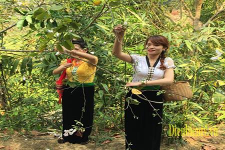 Đời sống sinh hoạt của người dân tộc Thái luôn gắn liền với loài hoa Ban.