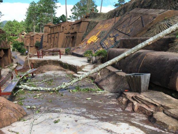 Cây rừng ngã vào khu tham quan khiến du khách tử vong. Ảnh: M.VINH.