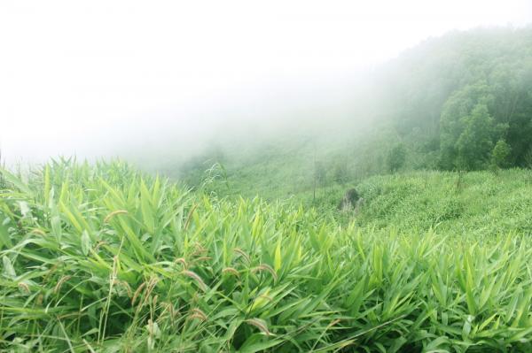 Cây cỏ xanh tốt, sương mù giăng kín lối.