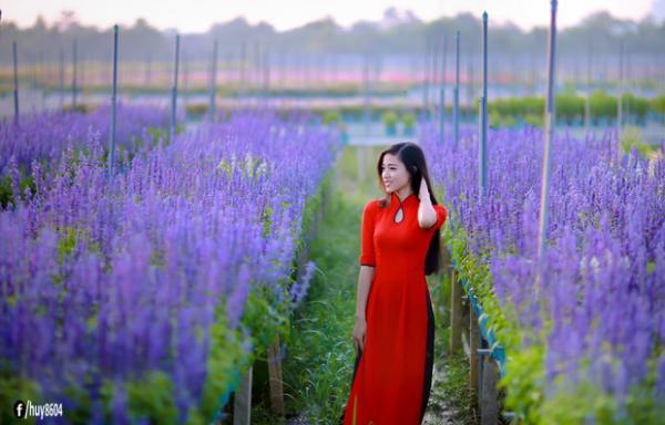 Cánh đồng hoa Salvia đẹp ngất trời ở khu du lịch Bửu Long (Nguồn: FBhuy8604)