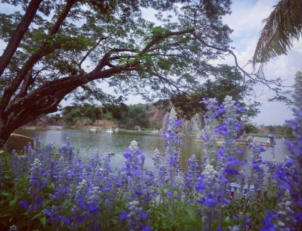 Ven hồ được nhiều loài hoa đang đua nhau nở, khoe hương sắc (Nguồn Ảnh: Instargram kykfrv)