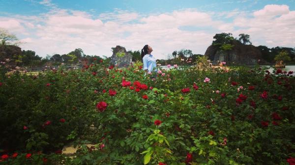 Vườn hồng đỏ thắm, bung nở rực rỡ (Nguồn: Instargram thaont3s2)