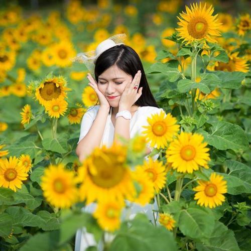 Mùa hoa mặt trời nở vàng rực rỡ cả một góc trời (Nguồn: Foody.vn)