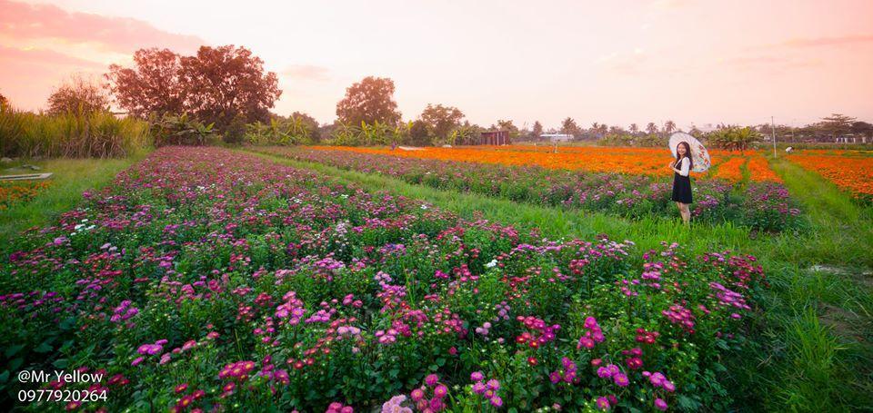 Bạt ngàn cánh đồng hoa Tết