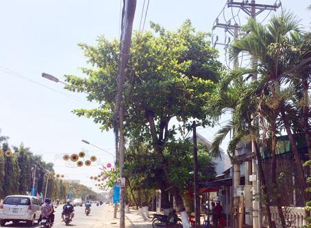 Nhiều loại cây tạp trên tuyến đường dự kiến cũng đốn hạ.