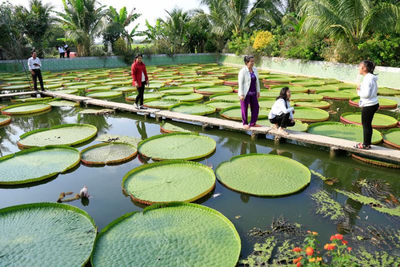 Nhiều du khách ở khắp nơi thích thú khám phá ngôi chùa có lá sen to phủ dầy trên mặt ao.
