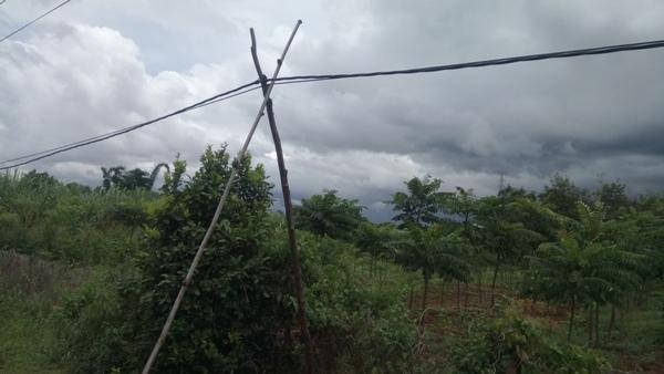 Cọc điện được làm bằng 2 cây khô chống tạm bợ\