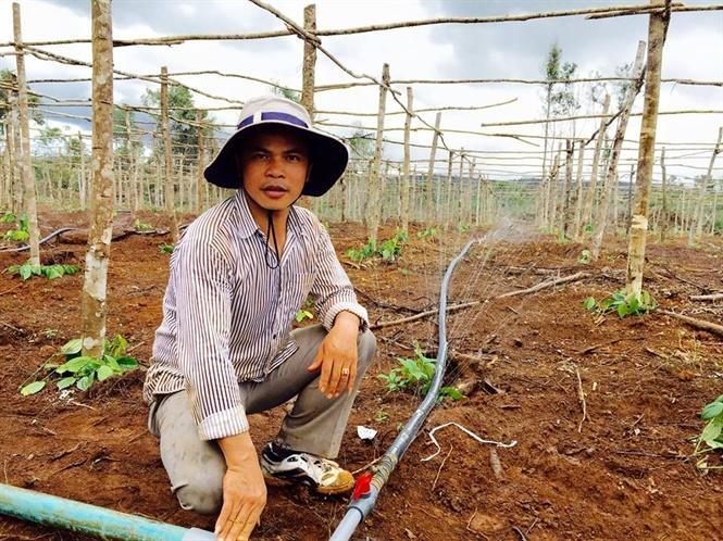 Công nghệ tưới tiết kiệm nước ngày càng được nông dân áp dụng rộng rãi